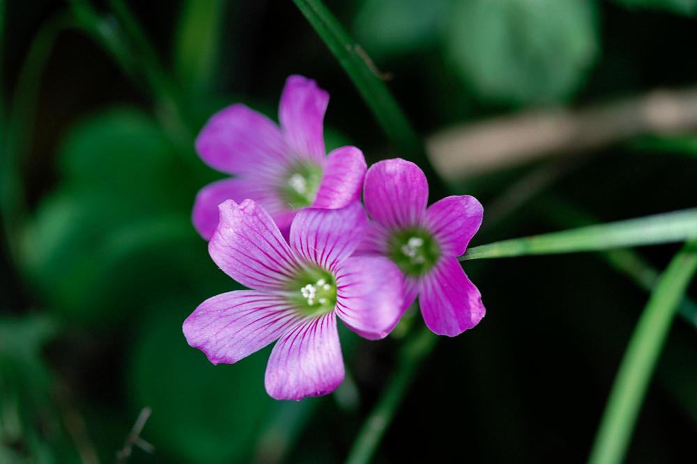 マクロレンズ 茂みの中の小さな花