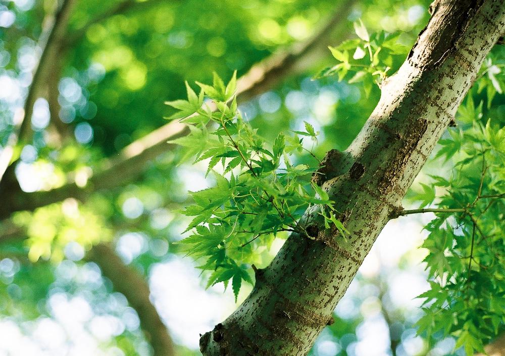 中野 四季の森公園4