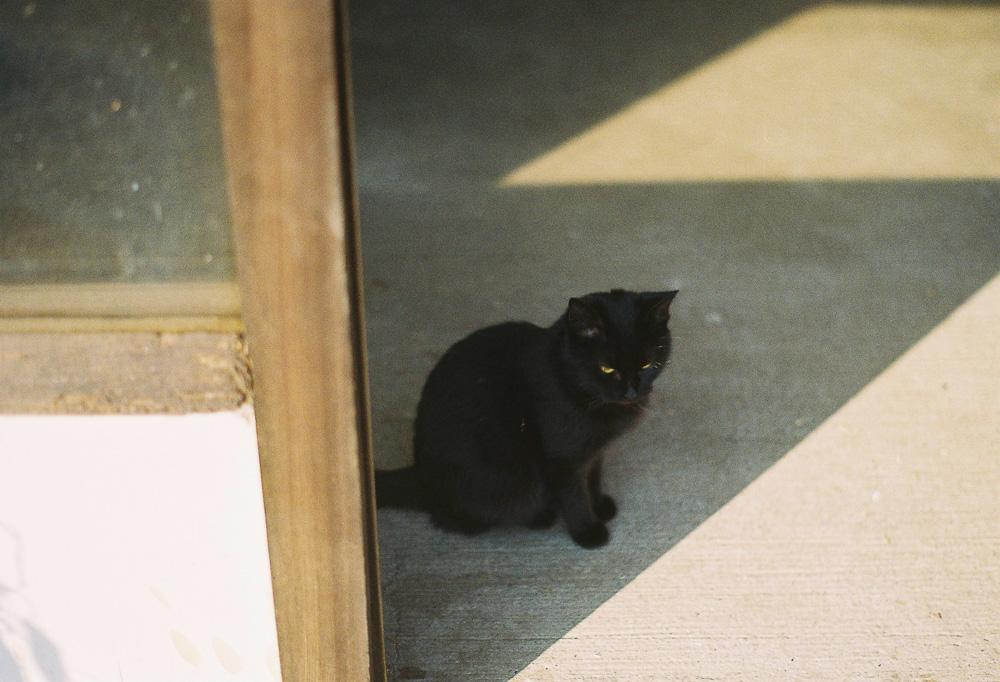 黒猫 ハイアングル