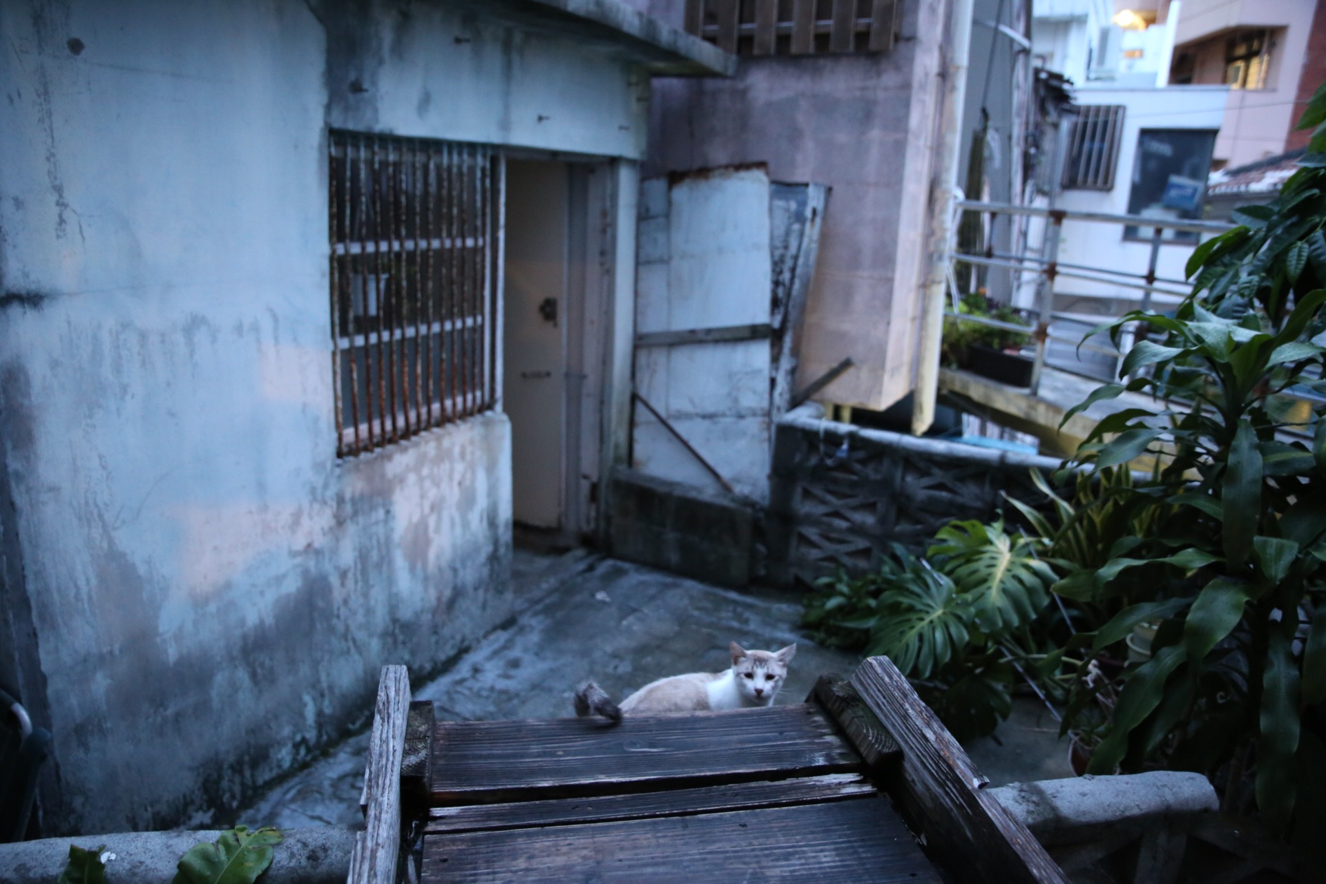 猫 Canon EOS 6D, EF 24-105mm F4L IS USM