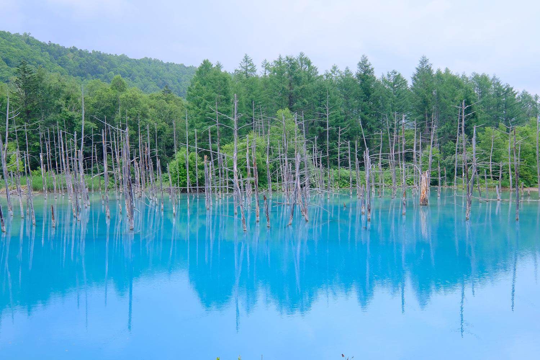 北海道 美瑛 青い池 X-Pro2+XF10-24mmF4 R OIS