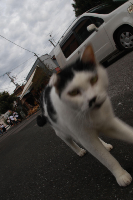 谷中銀座 猫