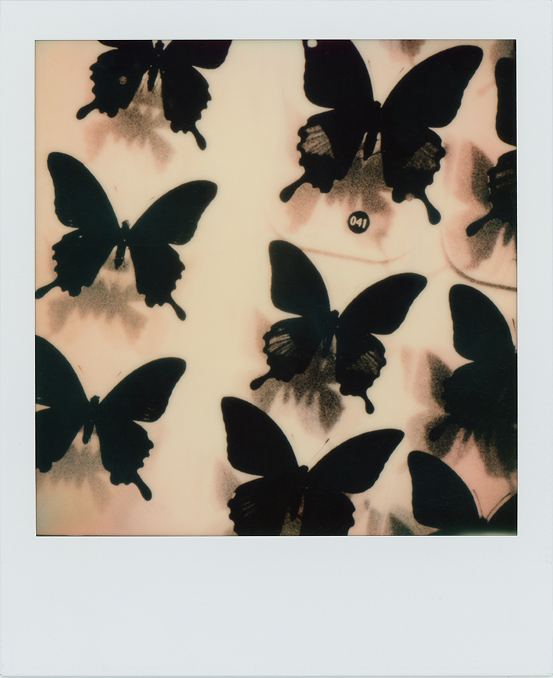 Polaroid Originals 蜷川実花