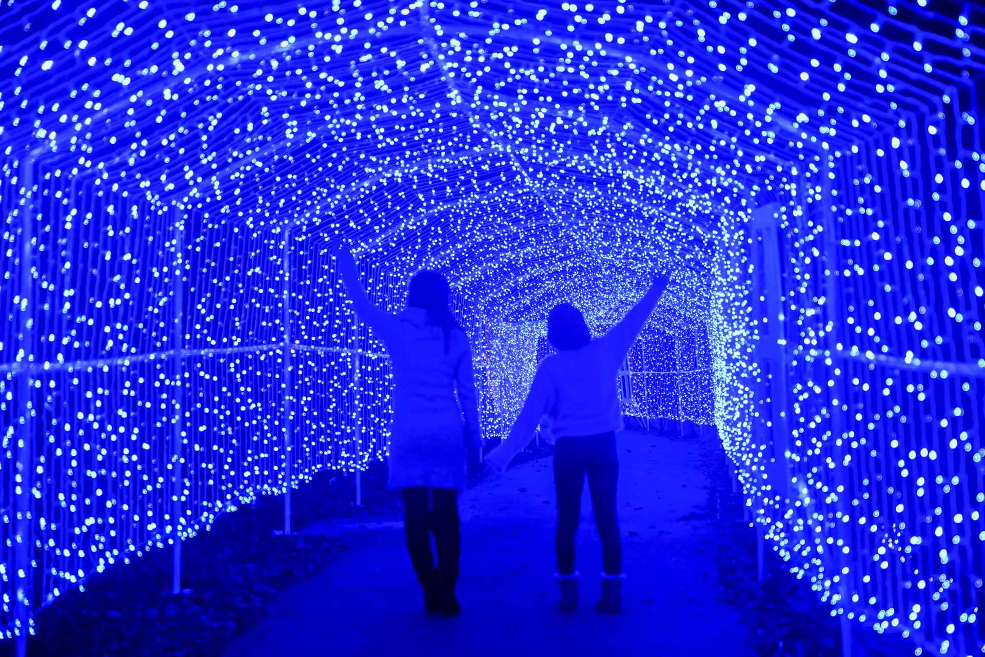 さがみ湖イルミリオン 光のトンネル