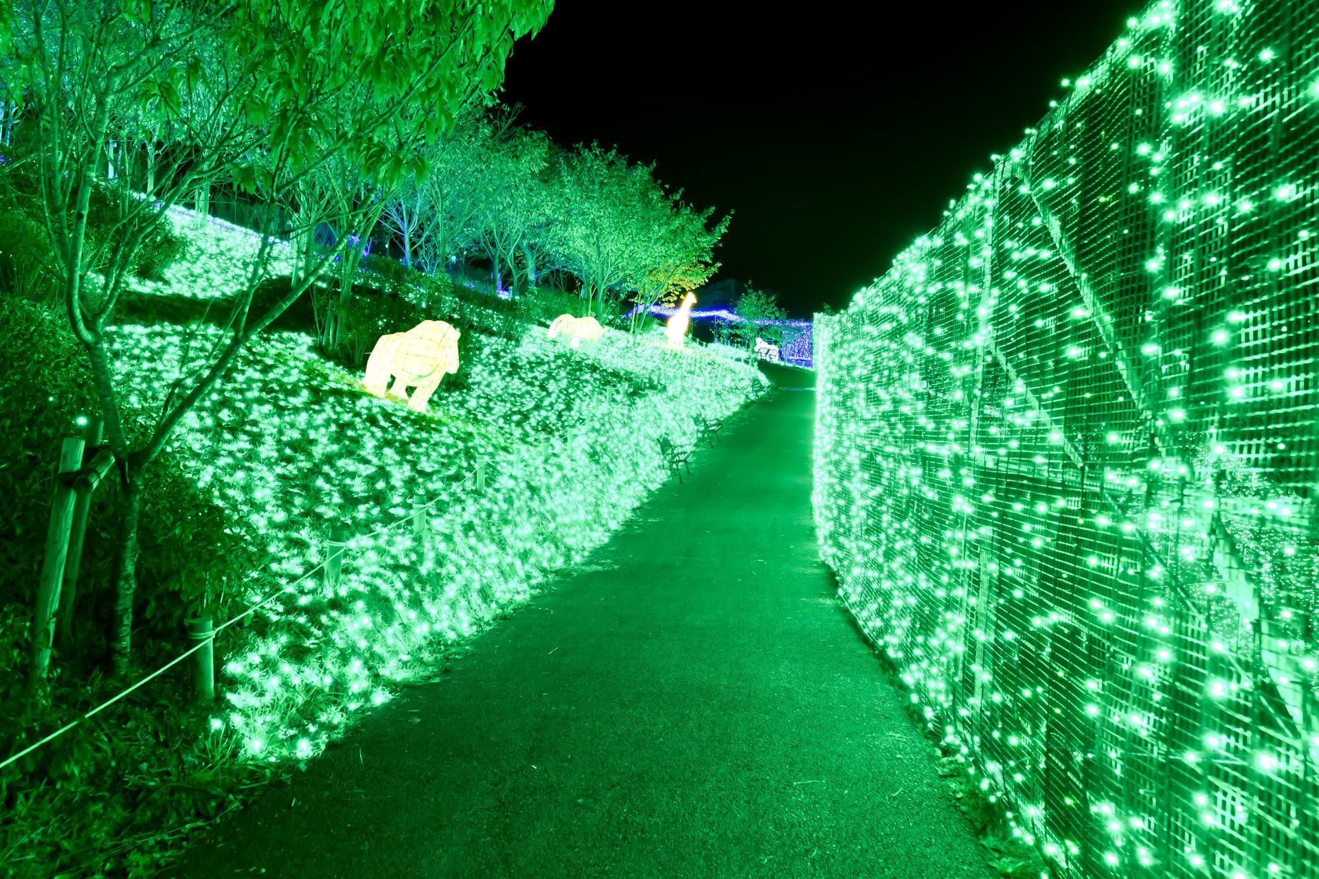 さがみ湖イルミリオン 光の森