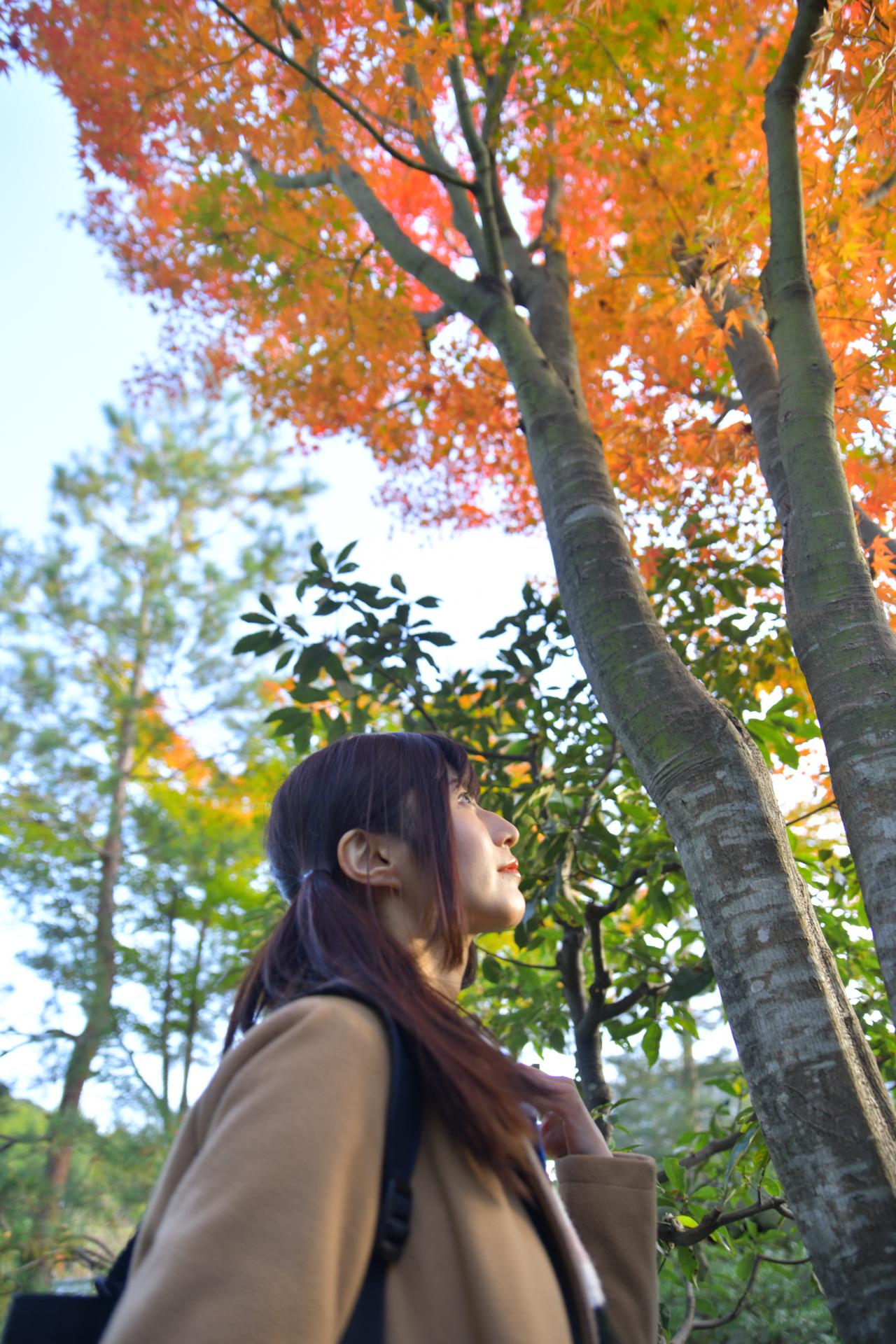 Nikon D850 京都 高台寺 紅葉 こめくら