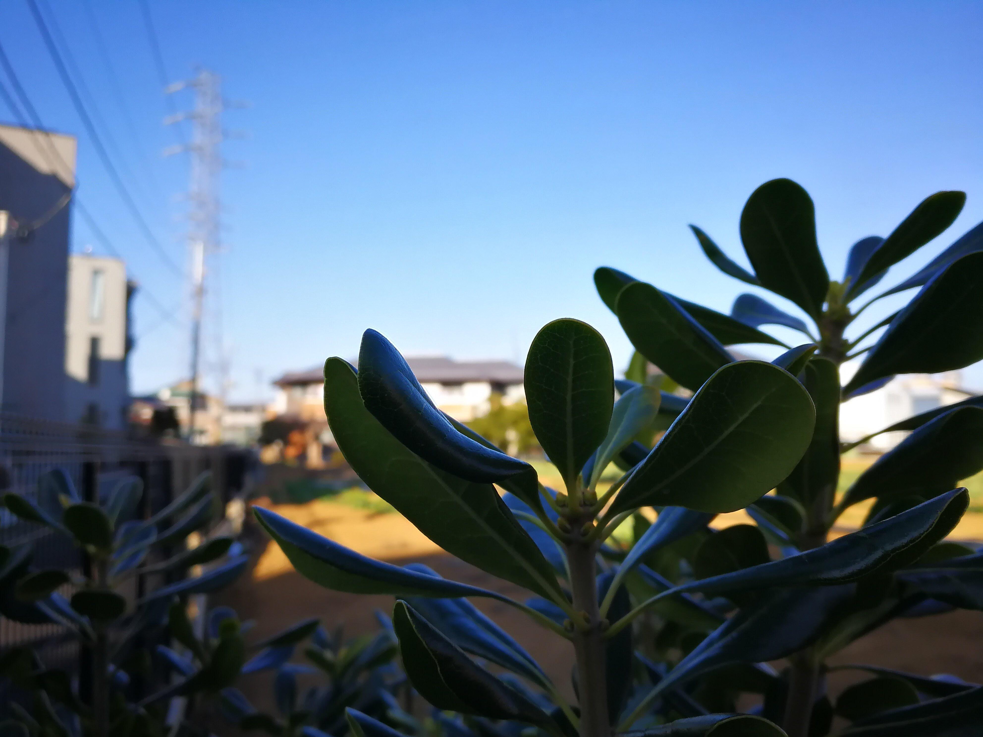 HUAWEI P10 Leica 作例