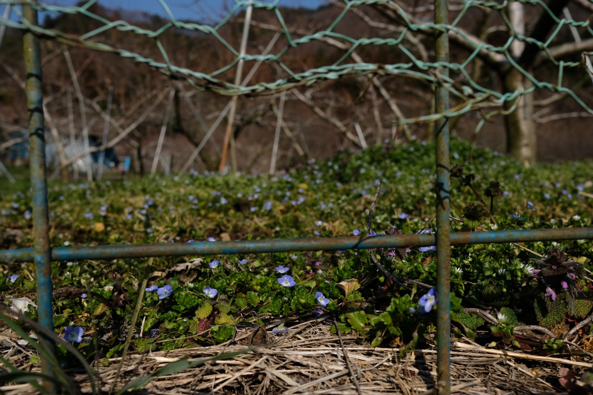 X-E3+XF23mmF2 R WR 山梨県 甲州市 山村 養蚕集落
