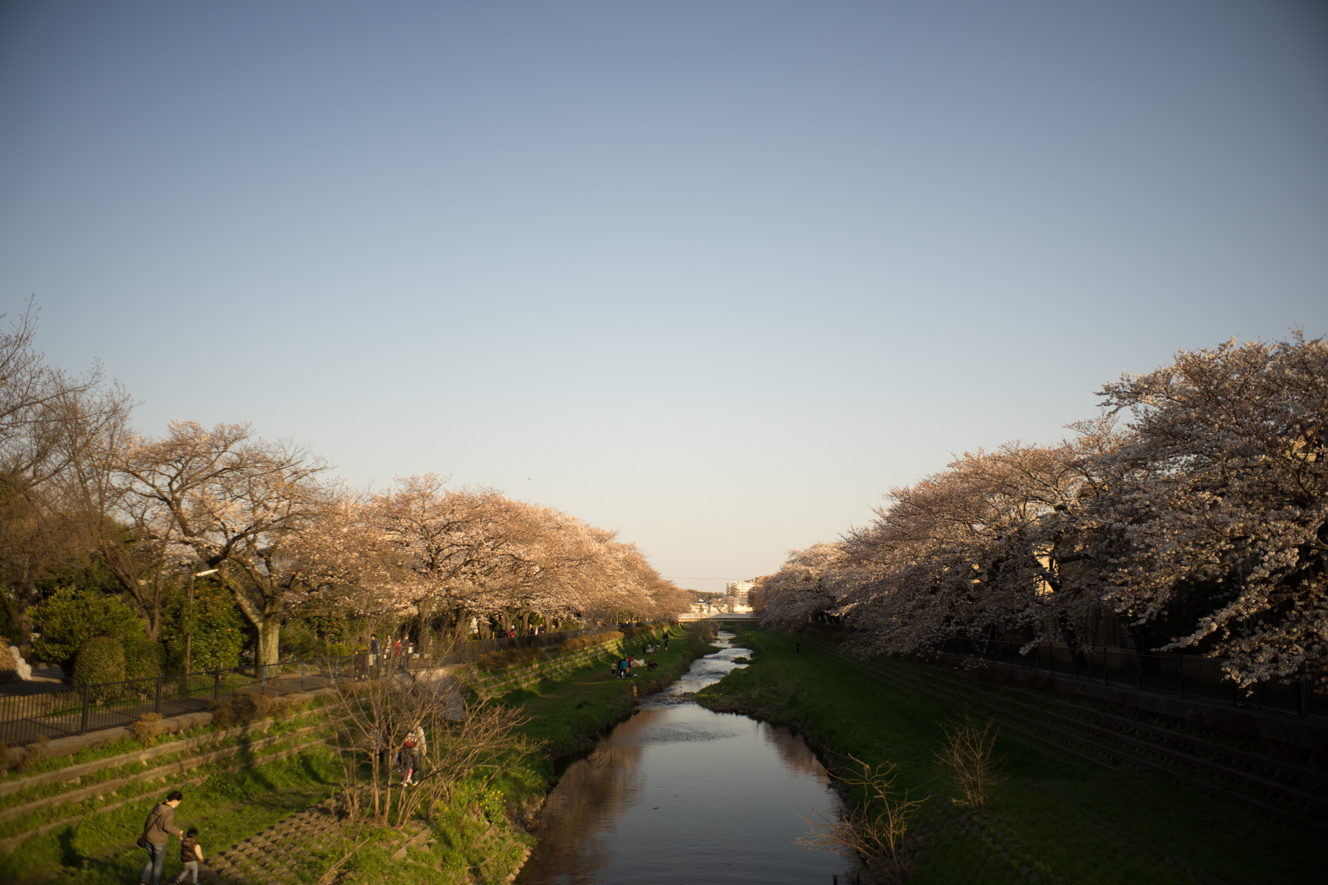 調布 野川 桜 SONY α7ⅱ, Super-Multi-Coated TAKUMAR 28mm F3.5