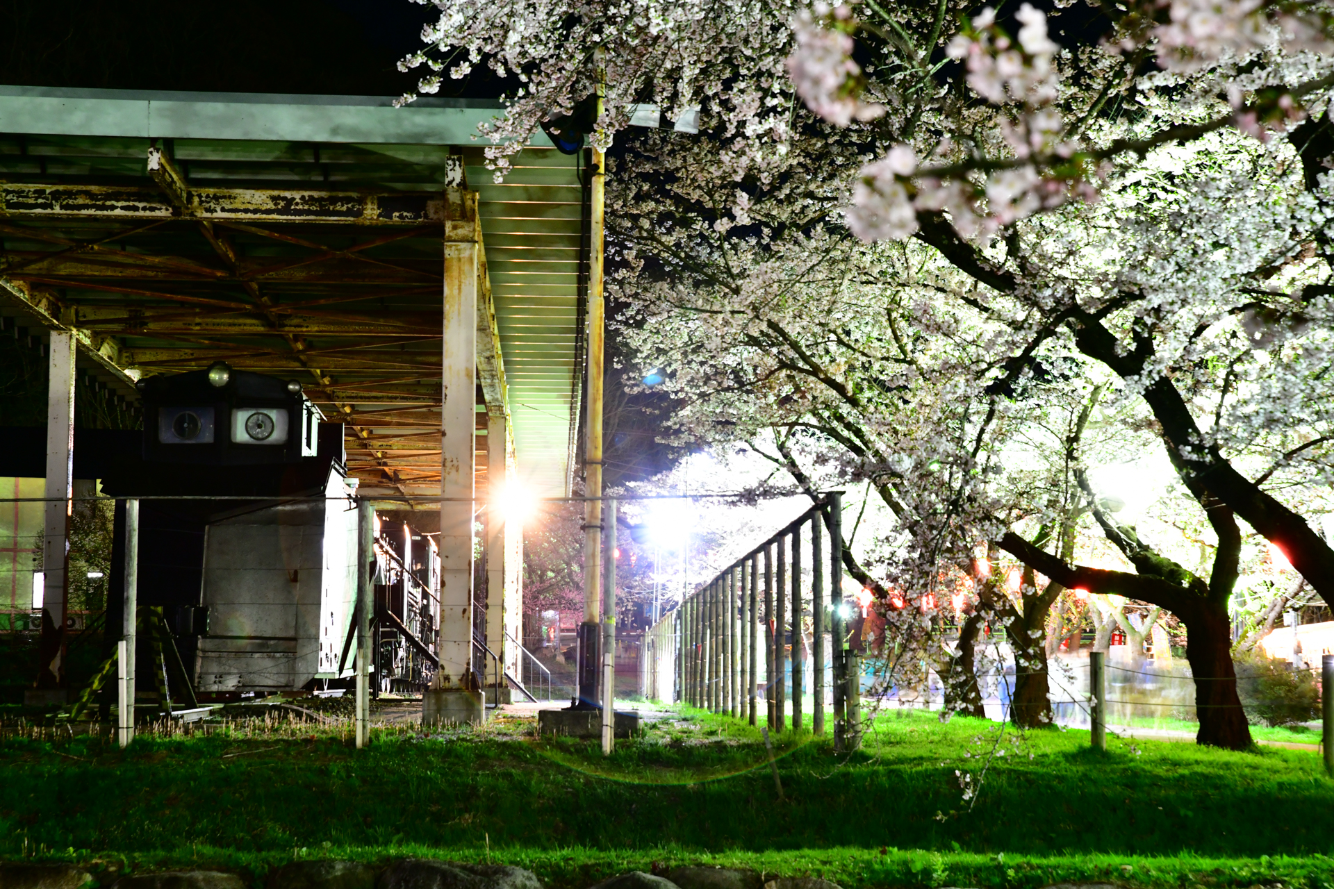 D850+SP 24-70mm F/2.8 Di VC USD G2 岩手県北上市 北上展勝地の夜桜