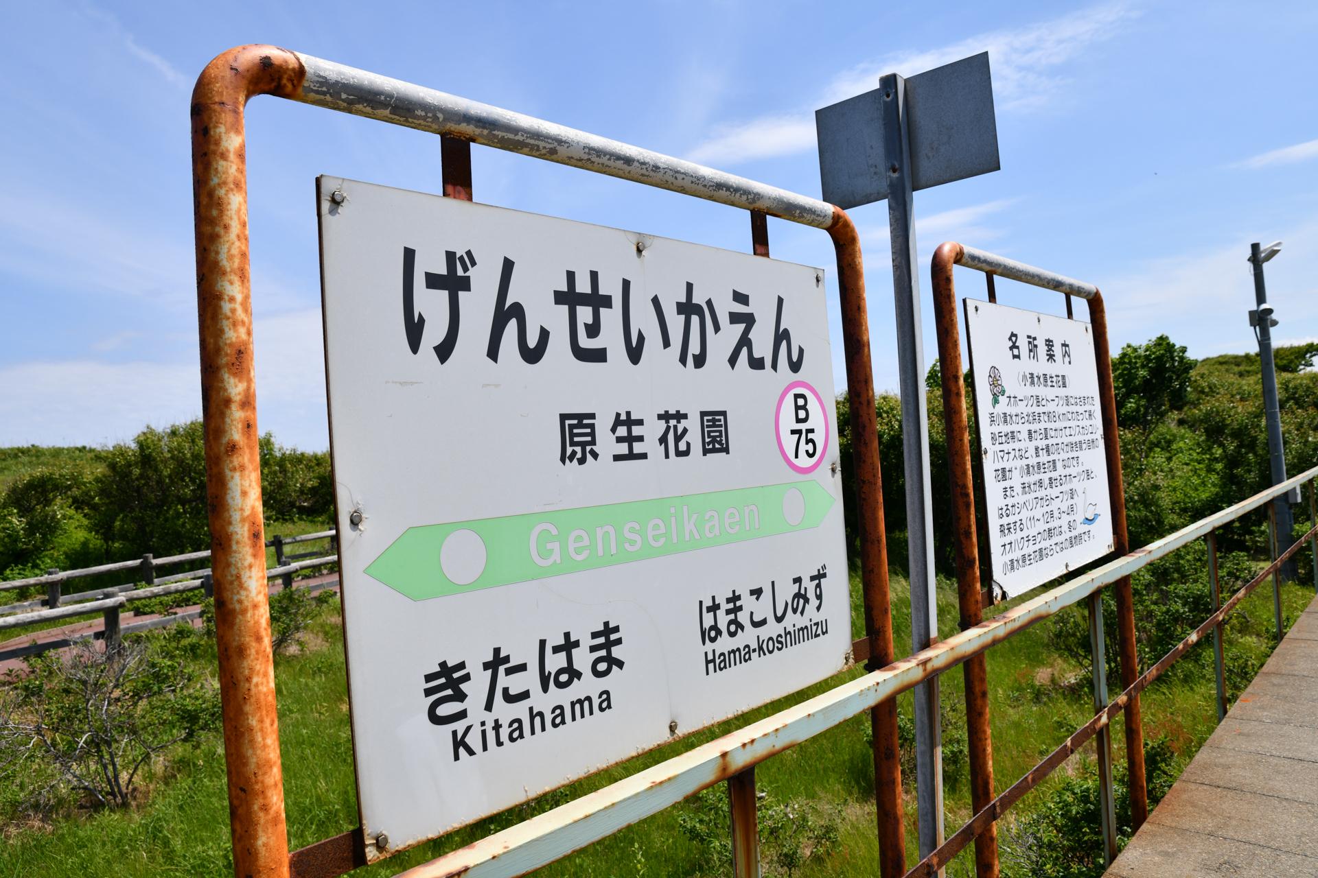 北海道 小清水原生花園 原生花園駅 D850 ニコン