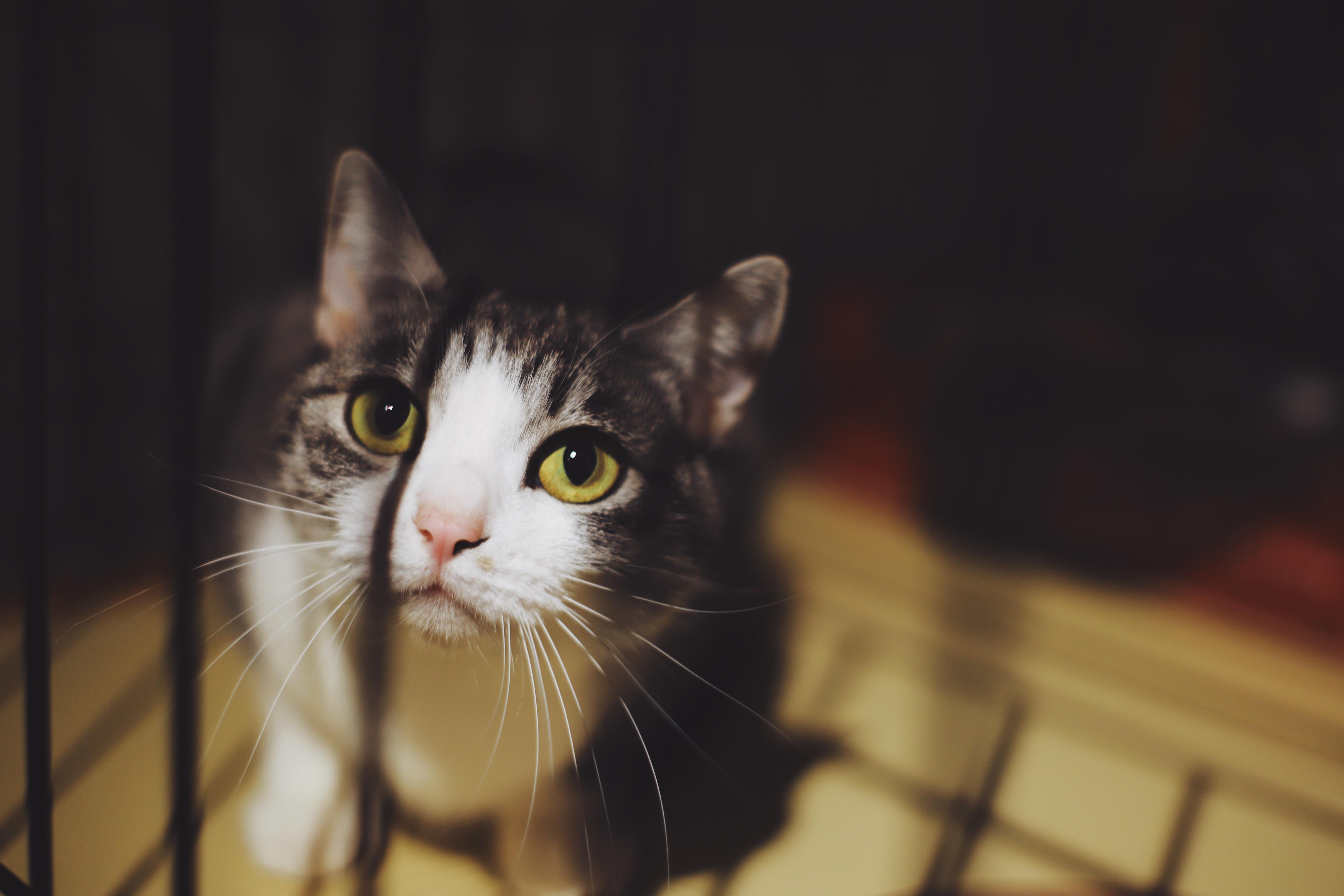 Canon EOS 6D MarkⅡ 作例 猫